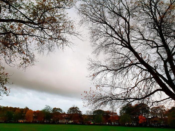 Park EyeEm Selects My Best Travel Photo Outside Photography Overcast Weather ❤ Autumn Swindon Railway Swindon Tree Sky Tranquil Scene Tranquility