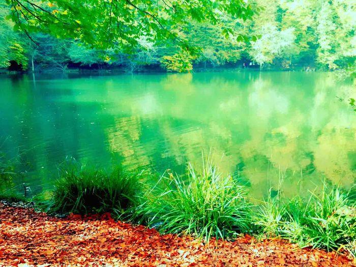 Yedigöllermilliparkı Göl Eye4photography  Eyemphotography Eye For Photography EyeEm Nature Lover Eyem Nature Lovers  Eye Em Nature Lover Objektifim Relaxing