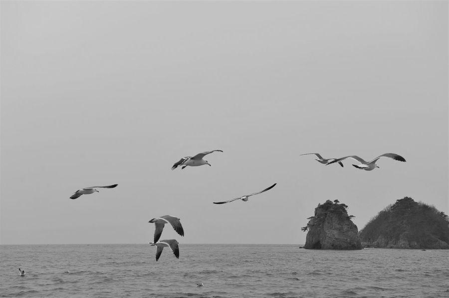 Animals In The Wild Bird Flying Sea Seagulls Sky Spread Wings