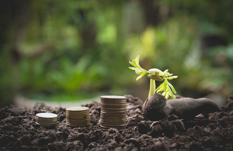 Close-up of seedling with coins