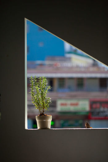 Potted plant on window at home