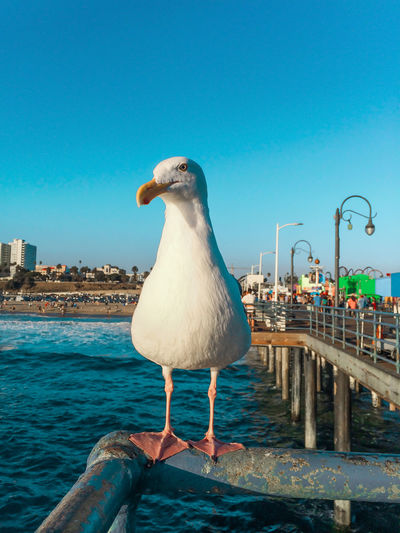 Close-Up Of Seagull Perching On Metallic Railing Over Sea Against Sky