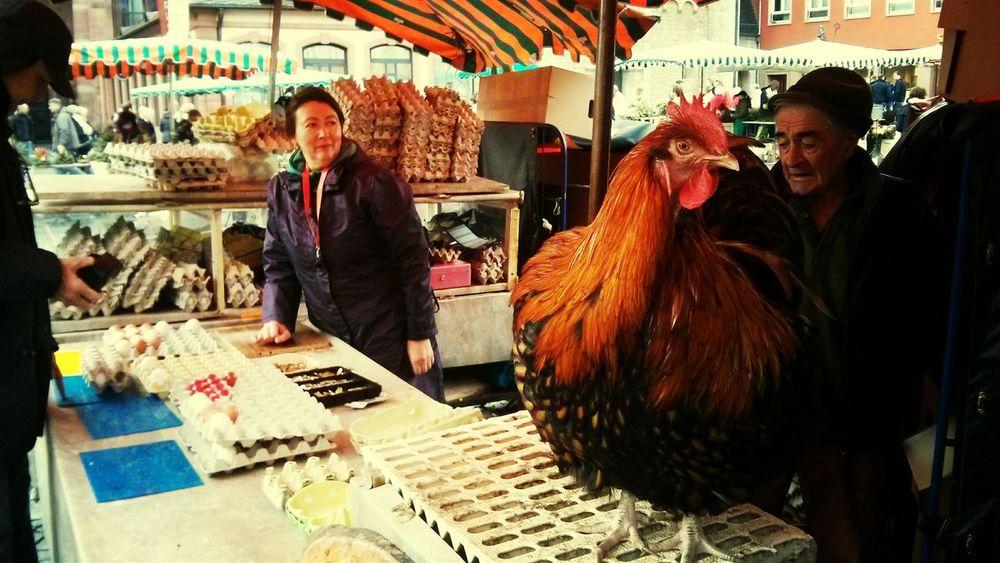 Wochenmarkt Eier Henne
