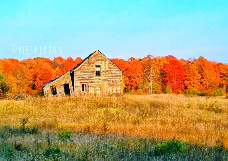 Abandoned Abandoned Places Michigan Autumn Fall Travel Forlorn Forgotten Eye4photography  EyeEm Nature Lover