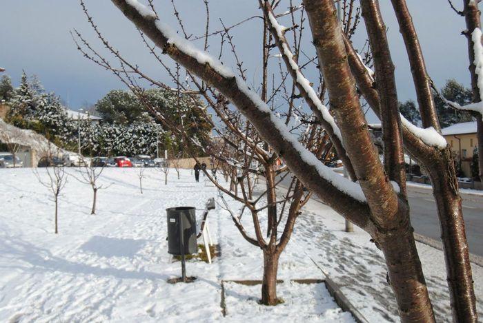 Snow Snow ❄ Cold Frio ⛄❄ Arboles Winter Nieve