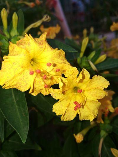 Flower Dama Da Noite ;—)