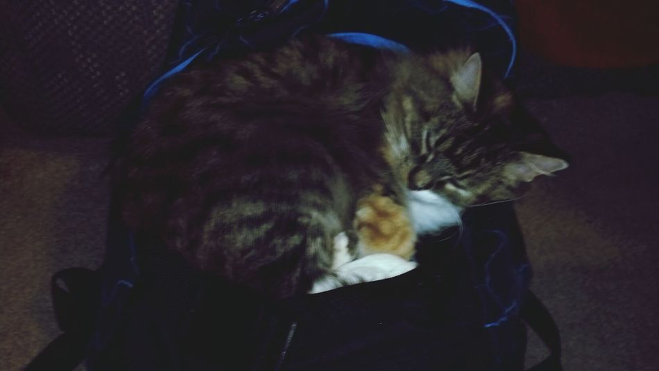 My Cat Napping on my son's backpack Leonie Filter