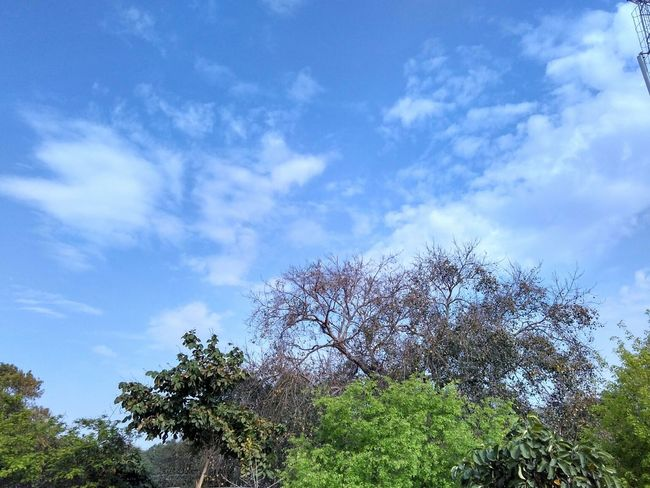 Scenics Nature_perfection Sun Nature Blue Nature Lover Natural Beauty Gauravsphotography Nature_collection Nature Photography Sky Showcase March Beauty In Nature EyeEm Clouds And Sky Clouds Cloud Tree Green Morning Morning Sky