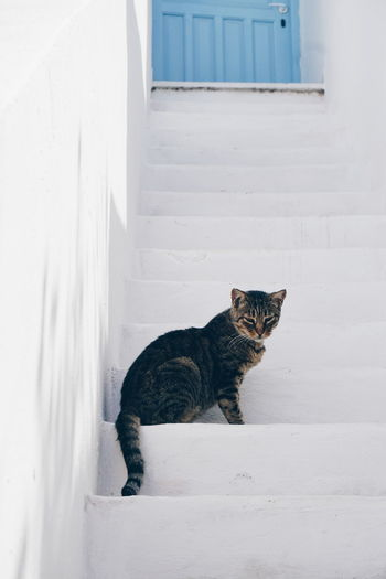Greek cat on white stairs Cute Pets Greek Cat Steps Amorgos Animal Themes Cat Cats Cute Cats Day Domestic Animals Domestic Cat Feline Greece Mammal No People One Animal Outdoors Pet Pets Sitting Steps And Staircases White Background Pet Portraits