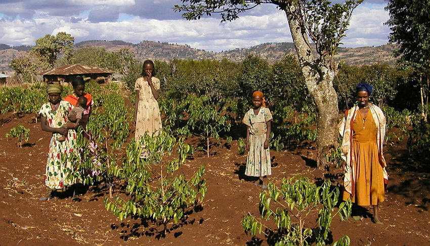 Colors Day Ethiopian Coffee Beans Fairtrade Fairtrade Coffee Farmers Field Full Length Growth Human Representation Mountain Nature Outdoors Real People Sculpture Sky Statue Tree Women Women Workers
