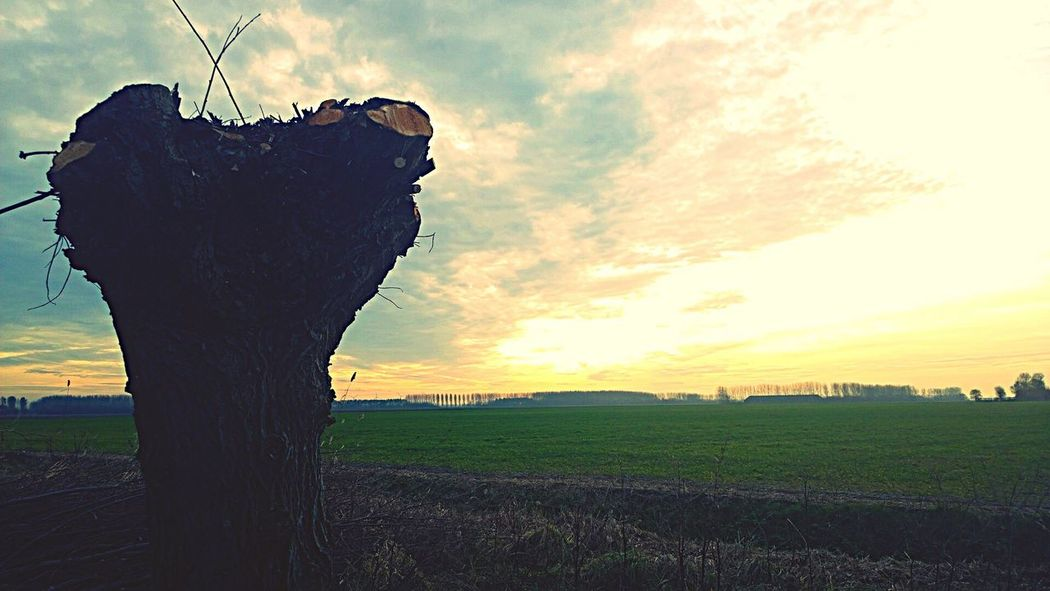Cloud - Sky Landscape Nature Beauty In Nature Sunset Field Grass Sky Outdoors Tree No People Enjoying Nature Holland Walkabout EyeEm Nature Lover Flakkee Beauty In Nature Middelharnis Tree Love Nature Landscape_photography Mobile Photography Nokia Lumia 1020