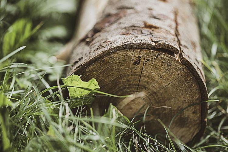 Log Roll Log