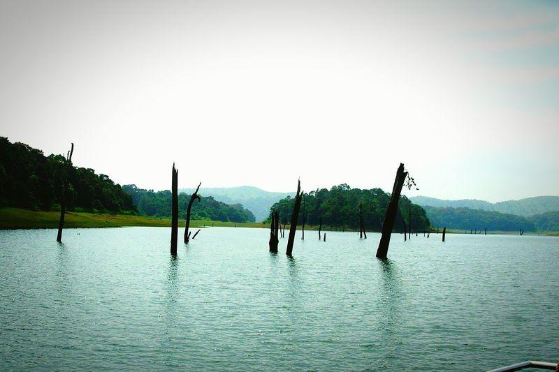 Lakes  Lake View Lost World Green Boating Water Reservoir Dead Trees Periyar Lake