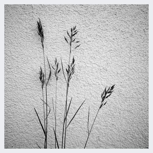 Black & White Minimalism Textures And Surfaces Nature Pattern Pieces
