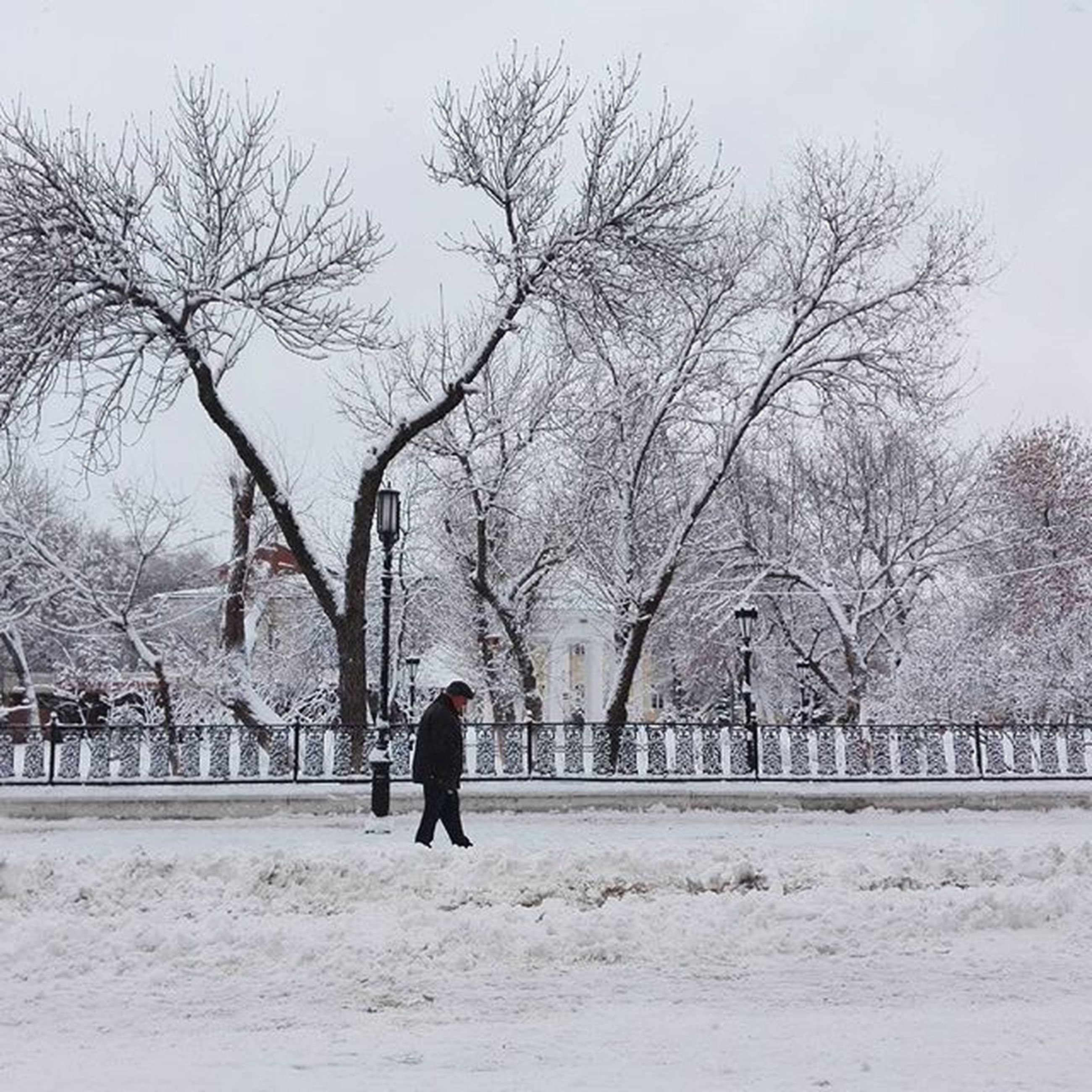 tree, bare tree, walking, branch, full length, clear sky, winter, men, snow, lifestyles, rear view, nature, built structure, leisure activity, day, season, cold temperature, architecture