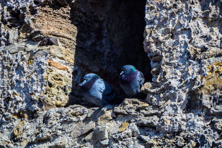 View of birds perching on rock