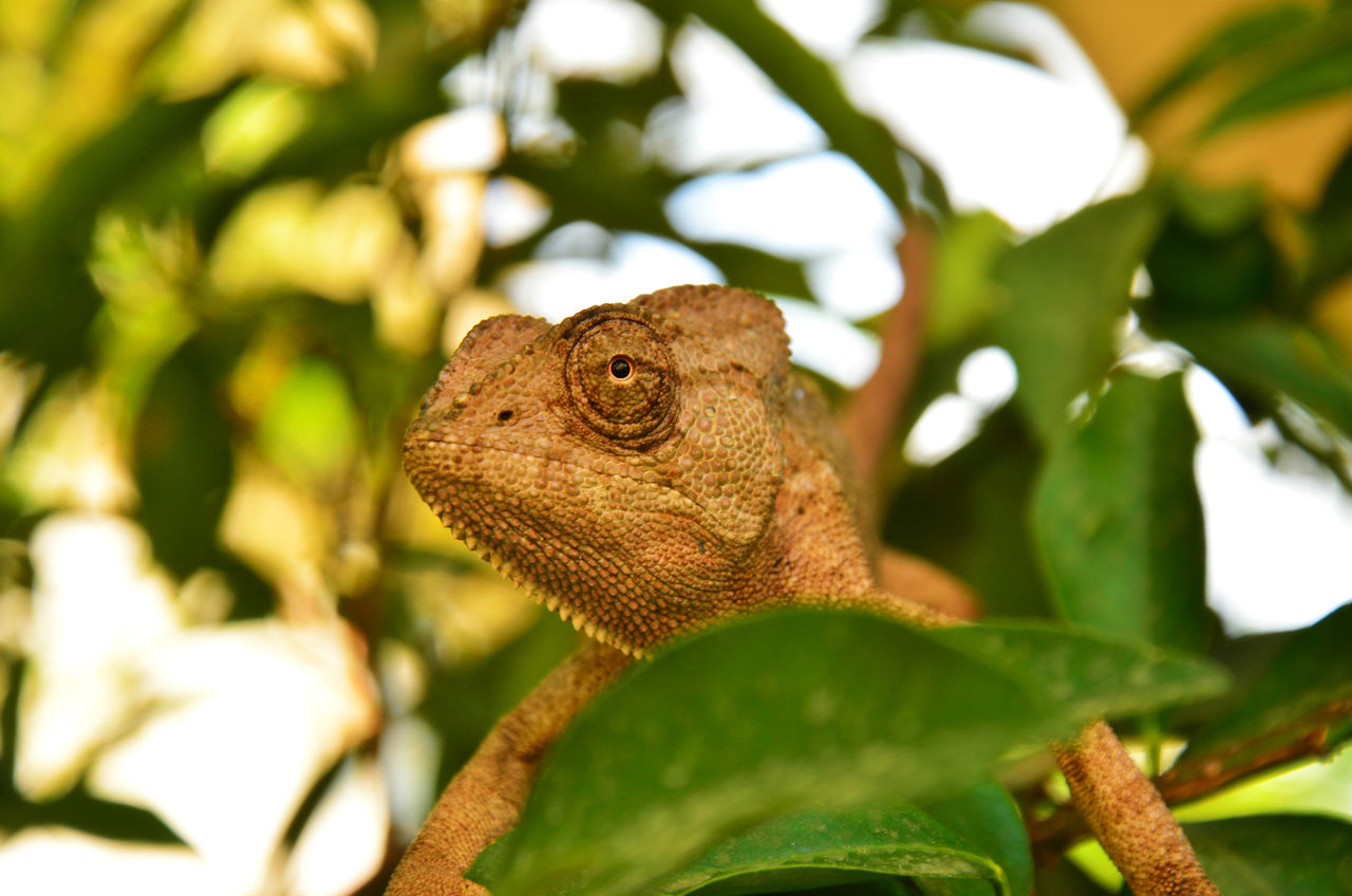 Low Angle View Of Chameleon On Tree