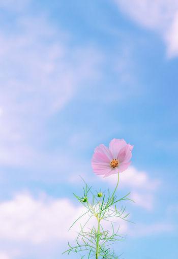 Petals Flower