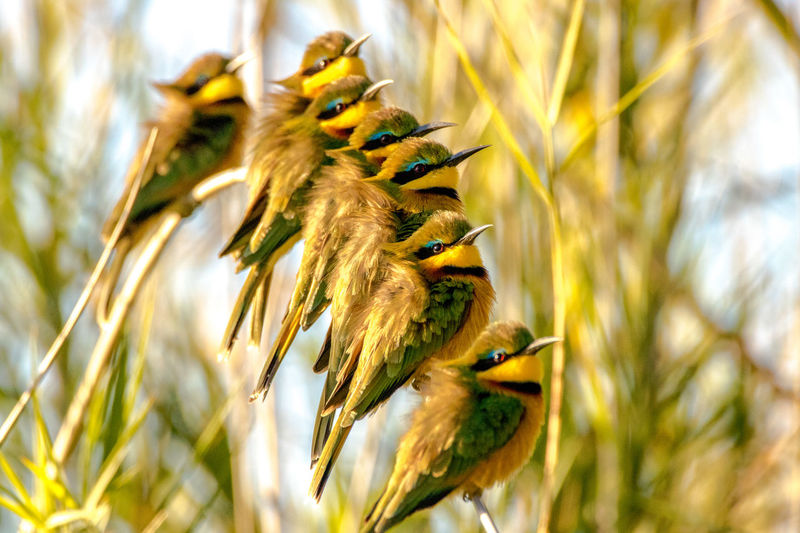 Animal Themes Animal Wildlife Animals In The Wild Beak Beauty In Nature Bee Eater Bird Close-up Day Earlx Focus On Foreground Grass Low Angle View M Nature No People One Animal Outdoors Perching Spread Wings Warming Up