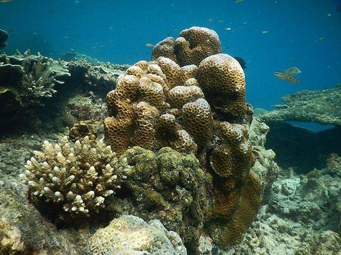 Mereka harus di lestarikan Underwater Freediving Trumbukarang INDONESIA Iloveindonesia BeautifulIndonesia Instatravel MyAdventure Mytrip Photography Laut Sea Pulaupari KepulauanSeribu