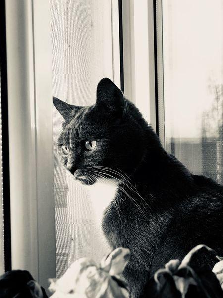 EyeEm Selects Animal Themes One Animal Cat Pets Animal Feline Window Domestic Animals Glass - Material