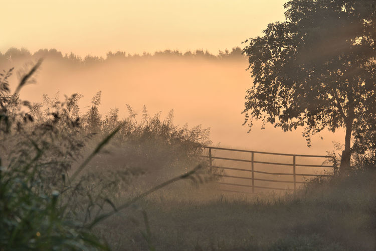 Beauty In Nature Countryside Fence Field Fog Foggy Growth Idyllic Landscape Majestic Mist Misty Nature No People Non-urban Scene Outdoors Outline Plant Remote Scenics Sky Sunset Tranquil Scene Tranquility Tree