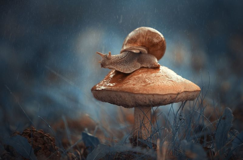Close-up of snail on mushroom