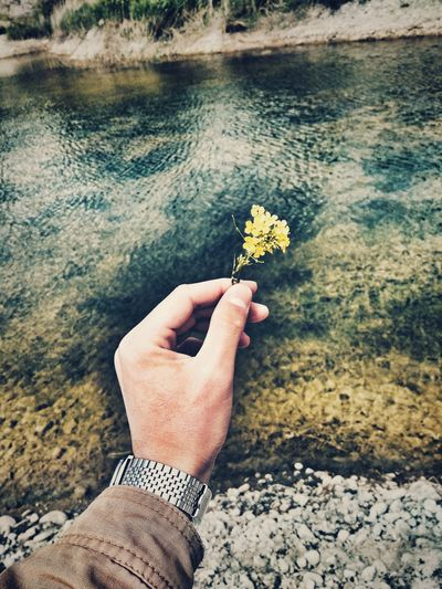 Free Dream Hand And Flower Sea Green Human Hand Flower Water Flower Head Holding Personal Perspective Close-up