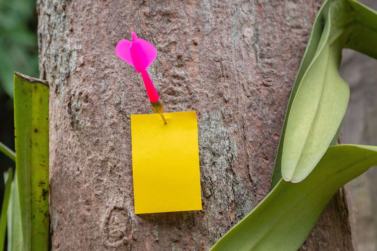 Send a message empty paper used for add messages with nature. Business Copy Space Darts Green Natural Nature Blank Communication Empty Goal Leaf Lifestyles Message Mock Up Nature Note Paper Park Plant Plant Part Success Tree Tree Trunk Trunk Yellow