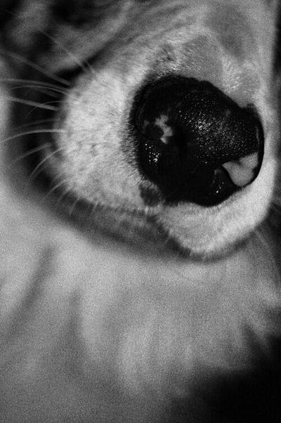 Blackandwhite Pets Dog Beauty My Dog Best Friends Nikon A Dogs Life Border Collie Cute Pets