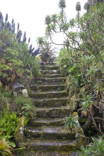 Steps Flowers Leading Up Spring Stone Tresco Tresco Abbey Gardens Wet