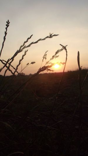 Sunset Sunset_collection Outdoors Grass Field Fence Stock Fencing