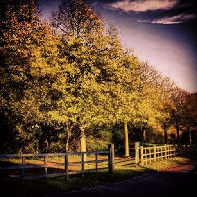 Cranford Park Entrance Drive