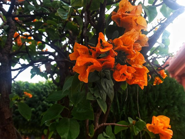 Growth Nature Tree Day Beauty In Nature Plant Leaf Outdoors No People Flower Freshness Close-up Flower Head