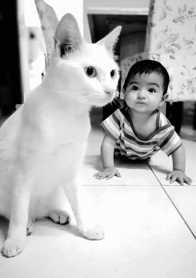 Cat White Cat Pure Baby Crawling Best Friend Pets Child Friendship Childhood Sitting Portrait Cute Looking At Camera Playing
