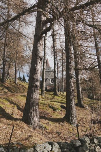 Crathie Kirk Tree Nature Growth Beauty In Nature Tranquility Outdoors Tranquil Scene No People Church Historic Scotland Balmoral Aberdeenshire Scotland Royal Deeside Uk History Christianity