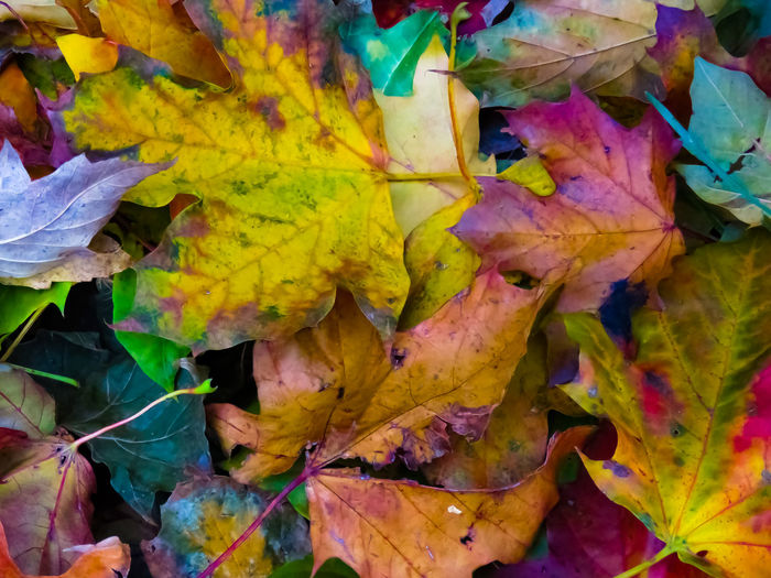 Fallen leaves Leaf Autumn Change Multi Colored Nature Day Backgrounds Close-up Beauty In Nature Yellow Outdoors NewEyeEmPhotographer NewEyEm