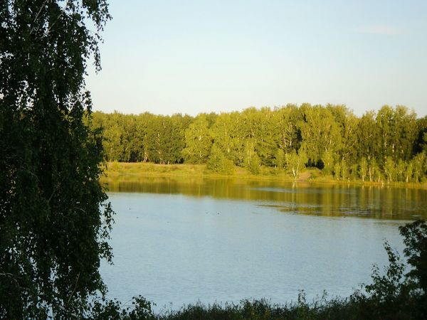 Water Reflections Lake View Forest Summer Peace Silence солнечно загород спокойствие тишина