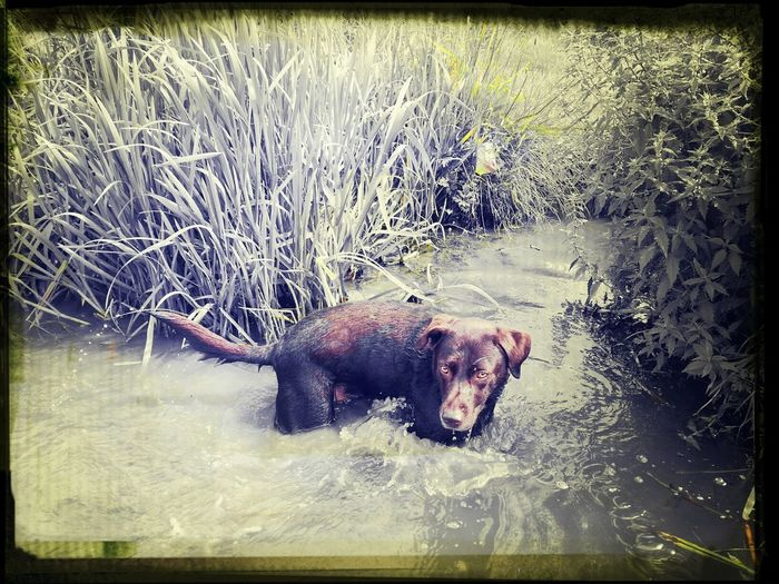 typical dog, finds the only bog next to the river