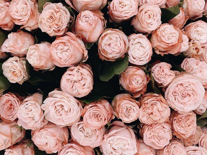 Full frame shot of roses