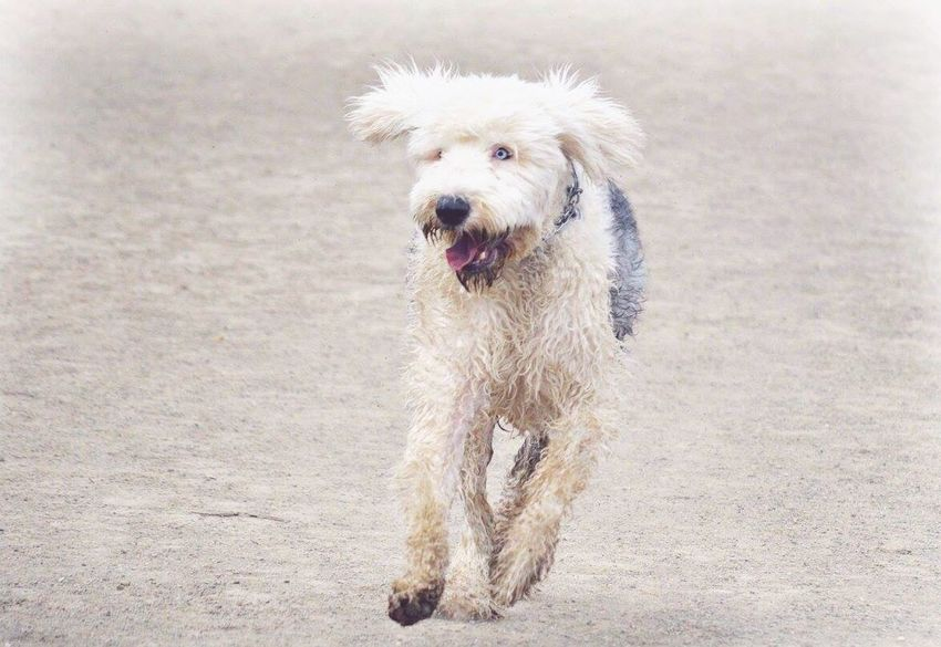 Dog Dogslife Dogs Of EyeEm Dog Running Dog Playing Dog Photography Dog Photos