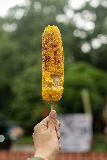 Human hand holding grill corn