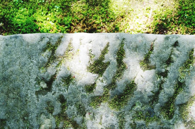 Day Water High Angle View No People Outdoors Moss Nature Plant Growth Close-up Japan Japan Photography