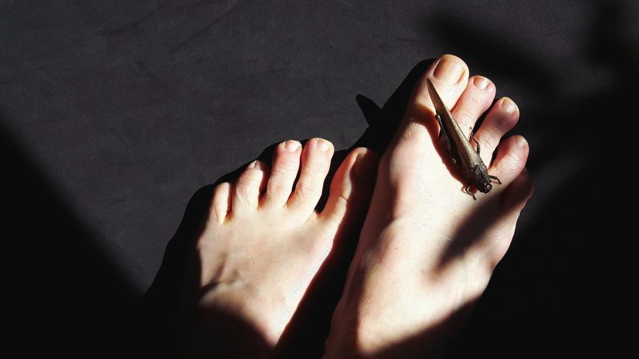Low section of woman with artificial insect on foot over black background