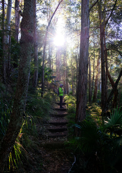 New South Wales  Sydney Royal National Park Forest Path Lens Flare Outdoors Footpath Real People One Person Tranquil Scene Staircase Day WoodLand Beauty In Nature Tranquility Sunlight Growth Tree Trunk Nature Non-urban Scene Plant Forest Lone Hiker Light Low Sun Green