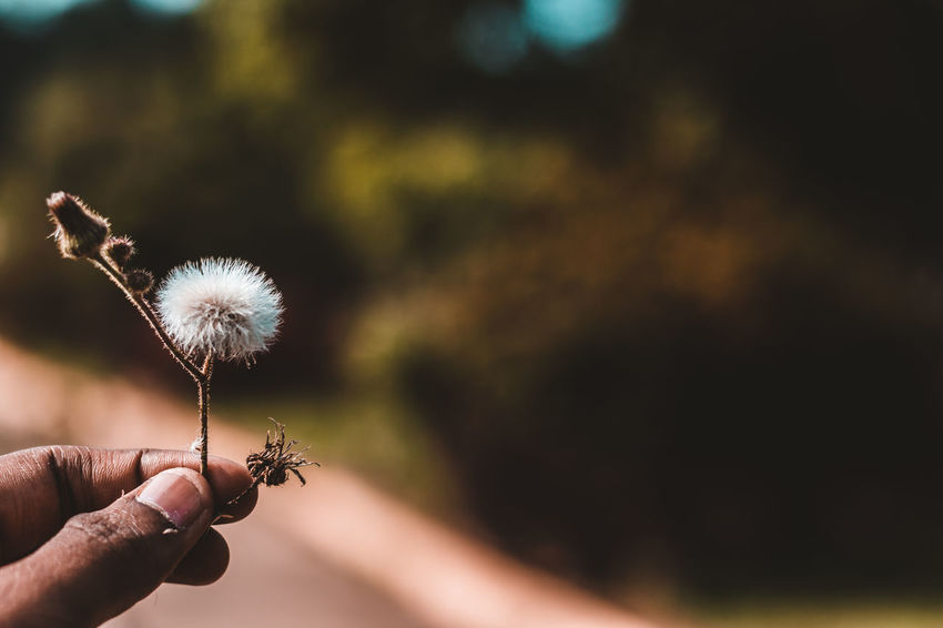 Travel Body Part Dandelion Dandelion Seed Day Finger Flower Focus On Foreground Fragility Freshness Hand Holding Human Body Part Human Finger Human Hand Nature One Person Outdoors Personal Perspective Plant Real People Softness Tamilnadu Vulnerability  Yercaud