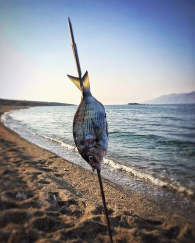 Sea Horizon Over Water Fish Beach Nature Sky Water Fish Fishing Spearfishing Spear Hunting Camping Survival Outdoors Clear Sky No People Beauty In Nature Animal Themes Day Close-up