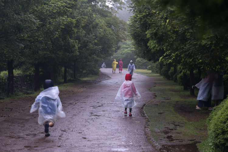 rainy day of Bijarim which is a famous forest in Jeju Island, South Korea Adult Bijarim Boys Childhood Day Forest Full Length Girls Growth JEJU ISLAND  Leisure Activity Men Nature Outdoors Pathway People Rain Rain Coat Rainy Real People Rear View The Way Forward Tree Walking Women