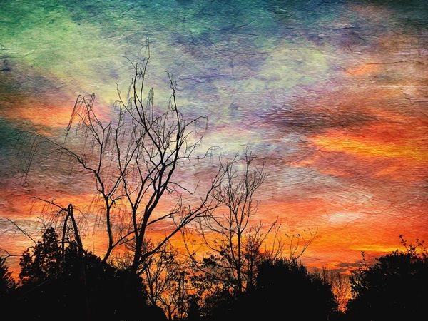 """""""Morning Worship"""" A birch tree stretches its many fingers toward a stunning Sunday morning sunrise in humble worship. Early Morning New Day Silhouettes Silhouette Sunrise Silhouette Sunrise_Collection Sunrise Sky Tree Beauty In Nature Cloud - Sky Silhouette Orange Color Tranquility Nature Scenics - Nature Dramatic Sky"""