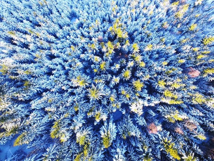 Perspectives On Nature Green Treetop in a Snow Covered Forest in Blackforest Germany Winter from a Drone  Dji Phantom Vertical Nature No People White Sunlight Outdoors Tiny Earth Travel Blue Infinity Trees Flying
